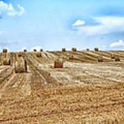 Fields Of Summer Poster