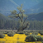 Fields Of Yellow Foxglove Poster