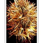 Fiery Floral Poster