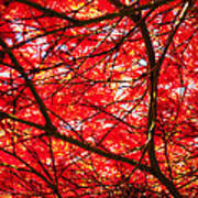 Fiery Maple Veins Poster