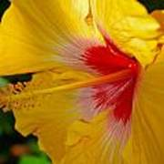 'fifth Dimension' Hibiscus Poster