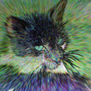 Filtered Cat Poster