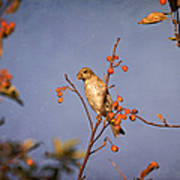 Finch In A Cherry Tree Poster