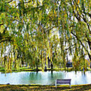 Finger Lakes Weeping Willows Poster