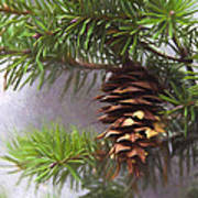 Fir Cone Digital Painting Poster