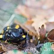 Fire Salamander Dry Leaves Poster