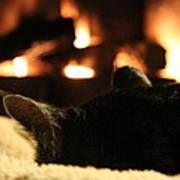 Fireside Cat Nap Poster