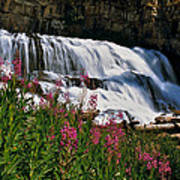 Fireweed Blooms Along The Banks Of Granite Creek Wyoming Poster