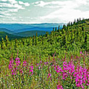 Fireweed Near Top Of The World Highway-alaska Poster
