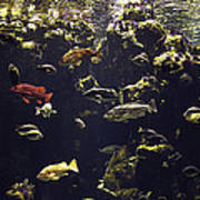 Fish Aquarium Poster