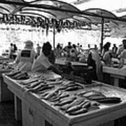 Fish Market In Dubai Poster by Maeve O Connell