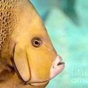 Fish Profile Poster