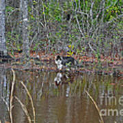 Fishing Feline Poster by Al Powell Photography USA