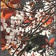 Five Petals - Spring Blossoms Poster
