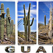 Five Saguaros Poster