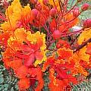 Flamboyant Desert Flowers Poster