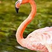 Flaming Flamingo Poster
