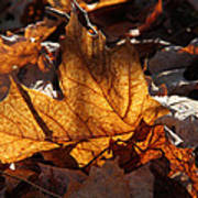 Flaming Leaves Poster