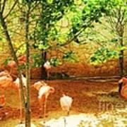 Flamingo 1 Poster