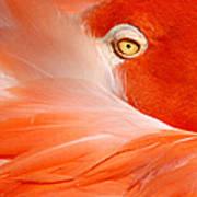 Flamingo Eye Poster