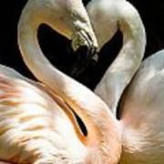 Flamingo Heart Poster