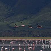 Flamingos  #6590 Poster
