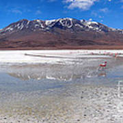 Flamingos At The Altiplano In A Salt Lake Poster