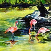 Flamingos At The St Louis Zoo Poster