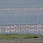 Flamingos On Lake Magadi Poster