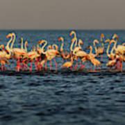 Flamingos On Lake Turkana Outside Elyse Poster