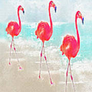 Flamingos On The Beach Poster