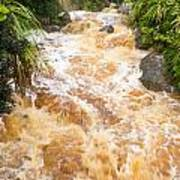 Flash Flood In West Coast Creek Of Nz South Island Poster