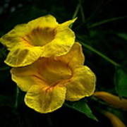Fleurs Jaunes Poster