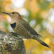 Flicker Poster by Debbie Sikes