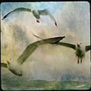 Flight Of The Seagulls Poster