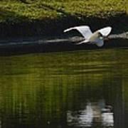 Flight Over Pond Poster