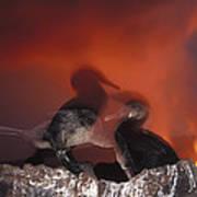 Flightless Cormorants And Volcanic Poster