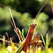 Flirty Mantis Poster