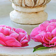 Floating Camellias Poster