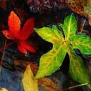 Floating Green Leaf Poster