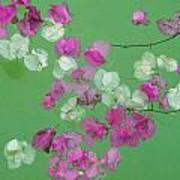 Floating Petals Poster