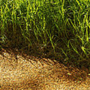 Floating Seeds-yosemite National Park Poster