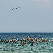Flock Of Seagulls Poster