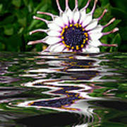 Flooded Flower Poster
