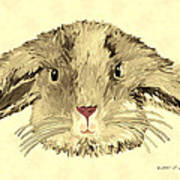 Floppy Bunny Poster