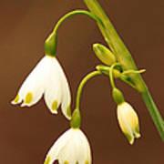 Flora 4 Poster