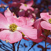 Floral Art Print Pink Dogwood Tree Flowers Poster