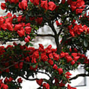 Floral Bonsai Poster