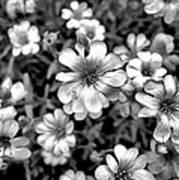 Floral Drama Poster