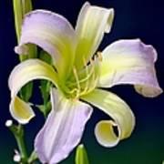 Floral Fanfare Poster